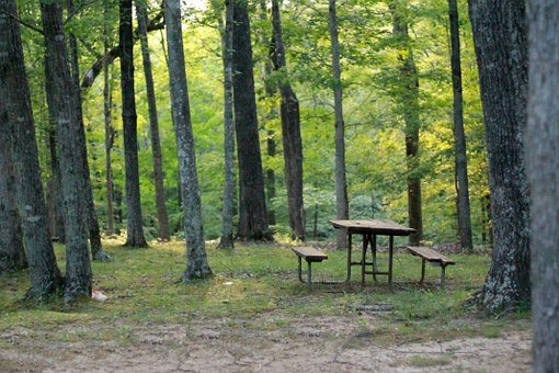 Picnic Table, Table, Woods, Soft Focus