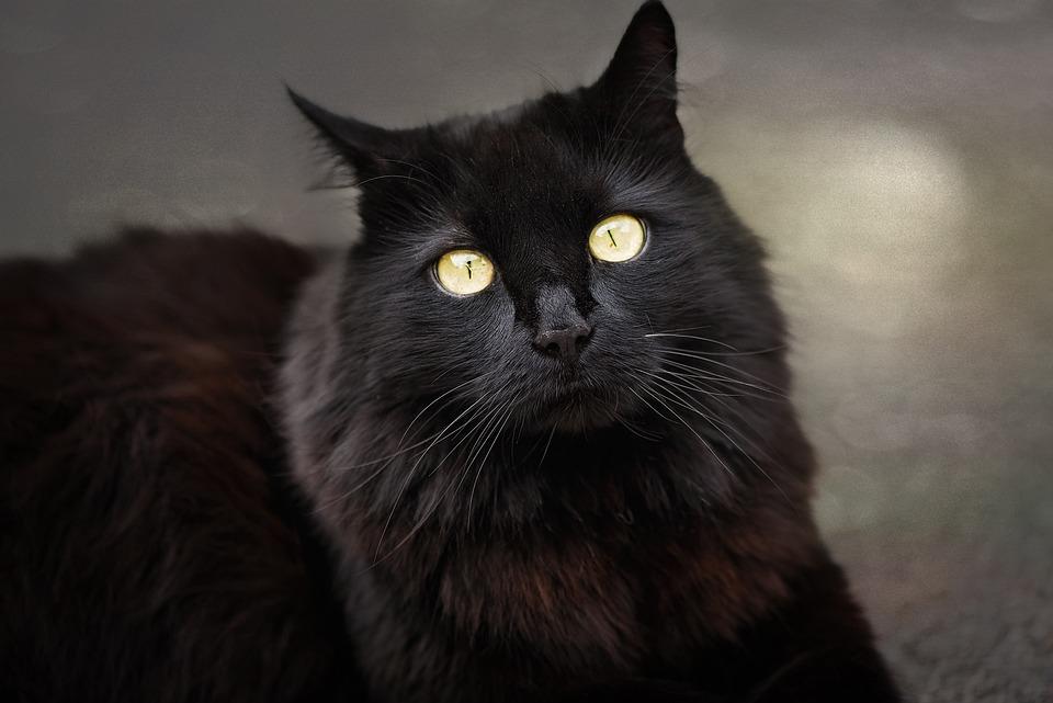 ženy černá kočička lesbický sex scence