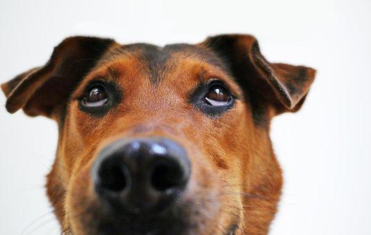 Dog, View, Funny, Sweet, Animal Portrait