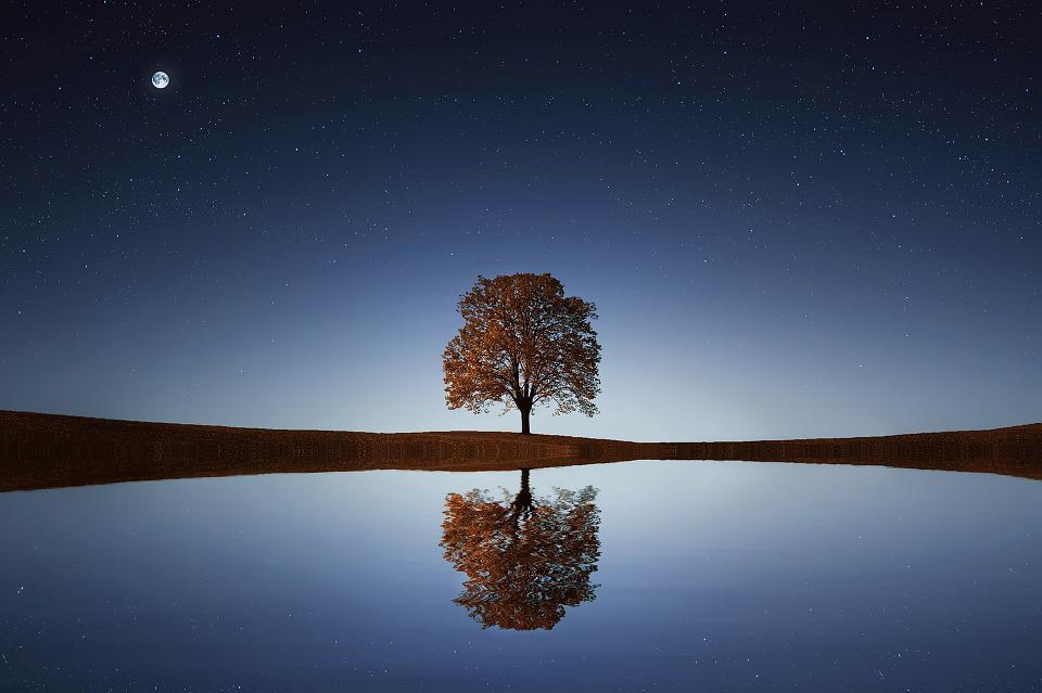 Tree, Lake, Stars, Reflection, Water, Calm, Tranquil