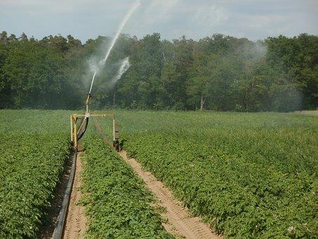 Potato, Fields, Irrigation, Water