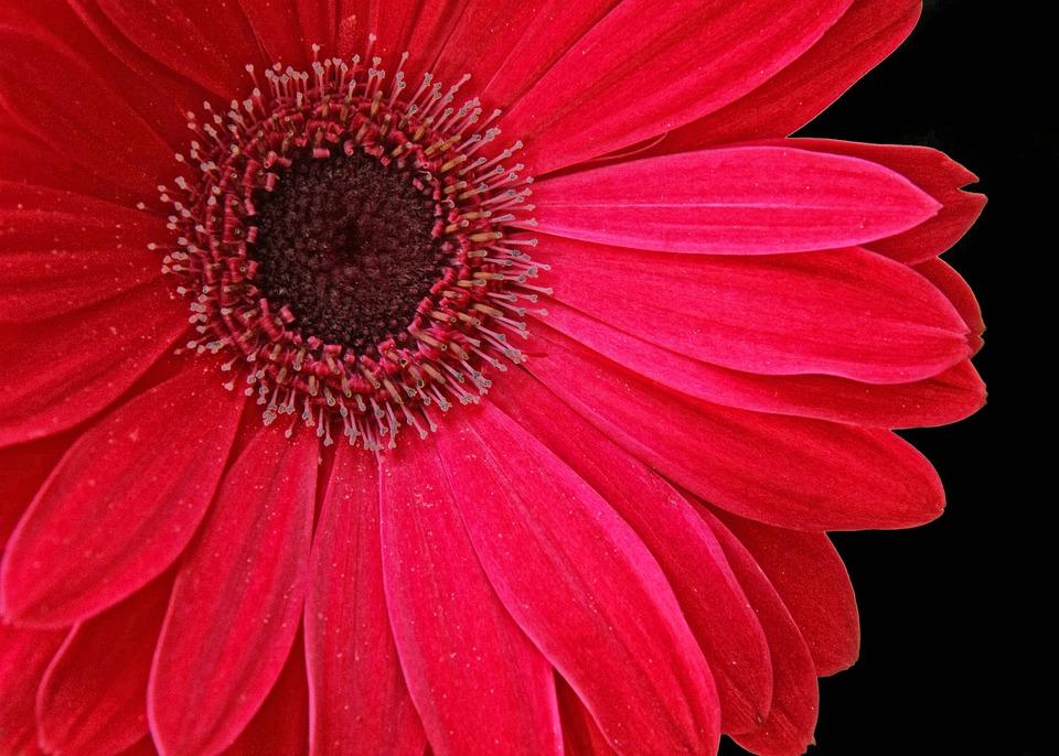 free photo floral bloom petal stamen free image on. Black Bedroom Furniture Sets. Home Design Ideas