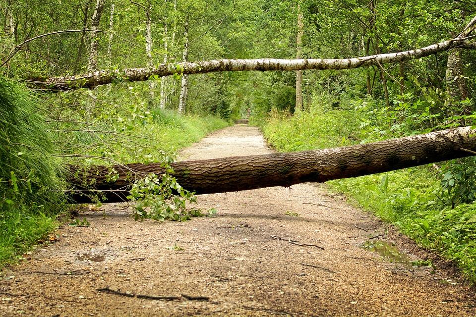 Tempesta, Danni Della Tempesta, Alberi, Forest, Natura