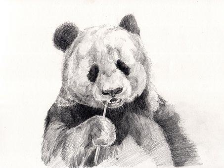 Panda Obrazky Pixabay Stiahnite Si Obrazky Zadarmo