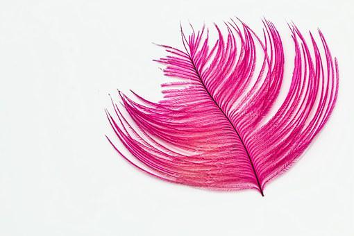 Feather, Desktop Wallpaper