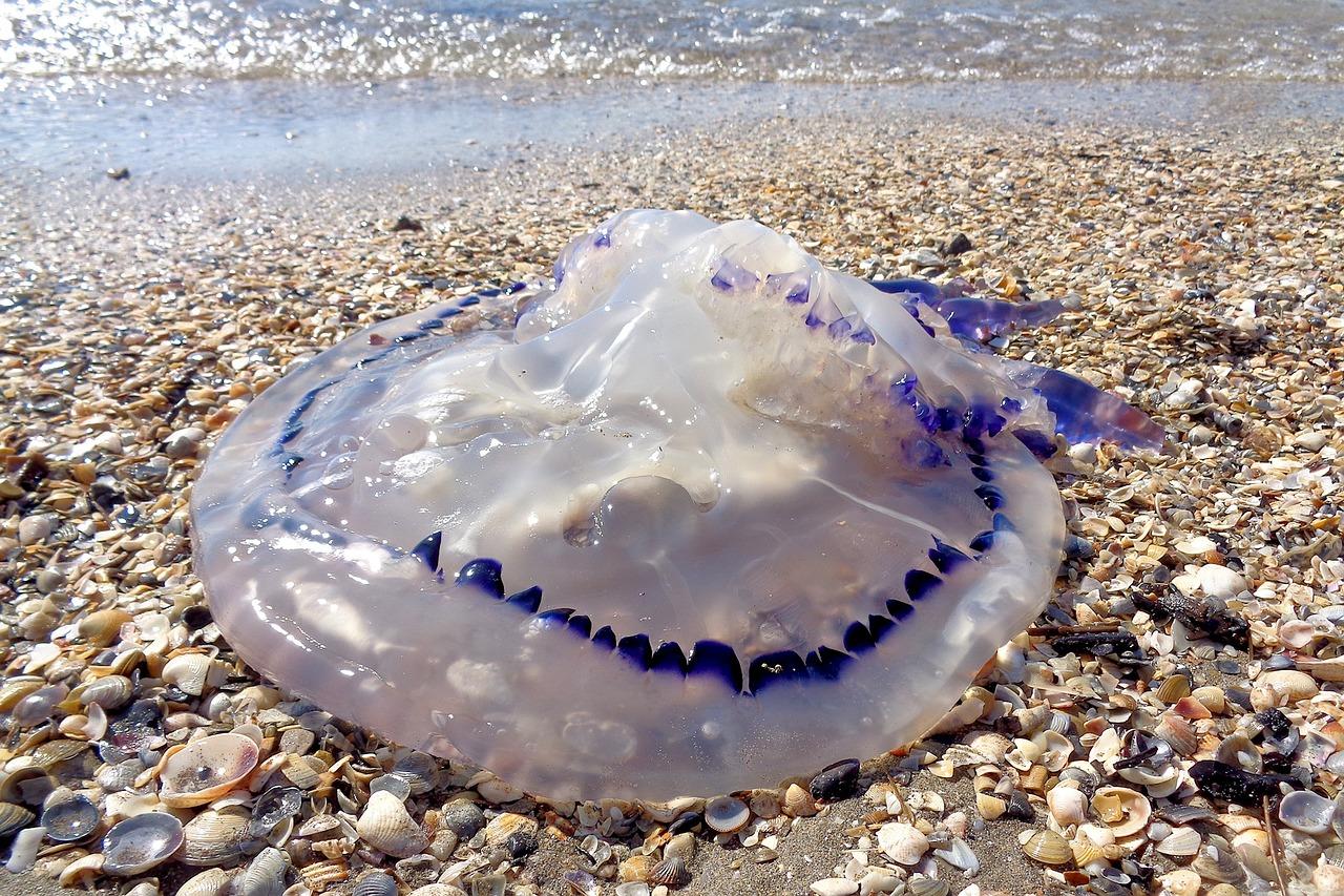 медузы в хорватии фото сервисов облачного майнинга