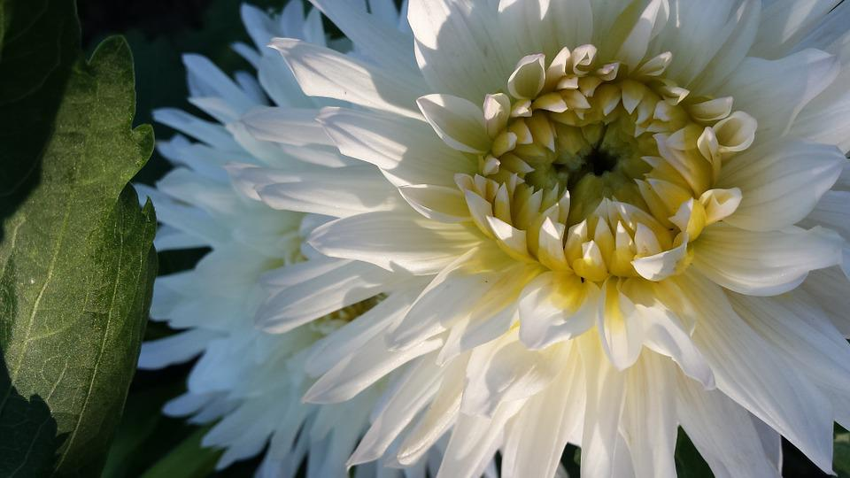 Blumen Weisse Blumenstrauss Kostenloses Foto Auf Pixabay