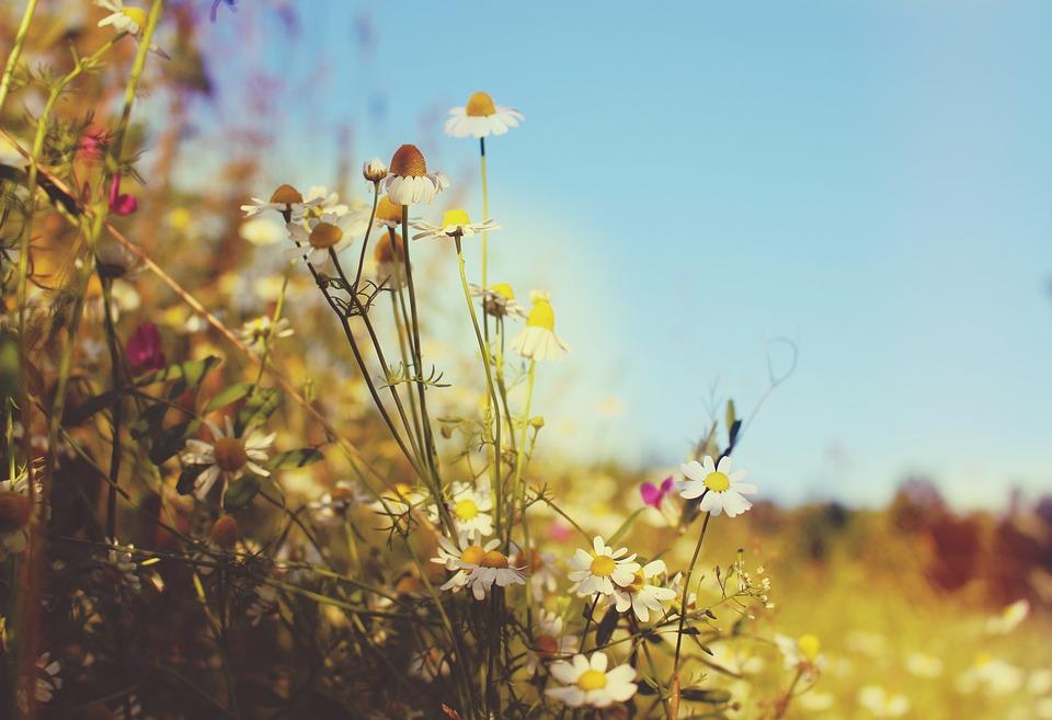 Padang Rumput Wallpaper Musim - Foto gratis di Pixabay