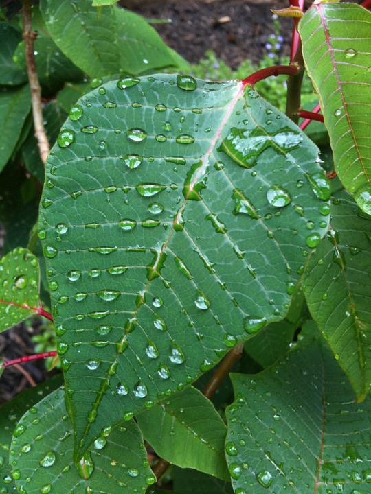 Leaves Droplets Nature - Free photo on Pixabay