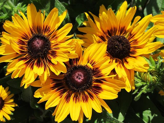 Photo gratuite fleur du soleil jaune fleur image gratuite sur pixabay 848197 - Fleur du soleil ...