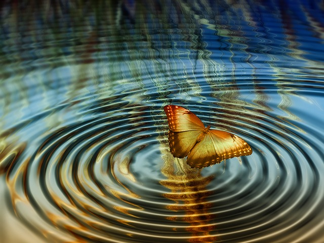 free illustration  collage  rings  butterfly  water - free image on pixabay