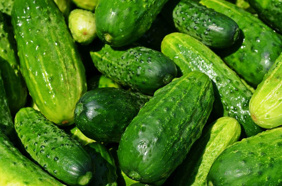 Cucumbers, Vegetables, Green, Healthy, Fresh, Eating,agriculture business ideas in hindi