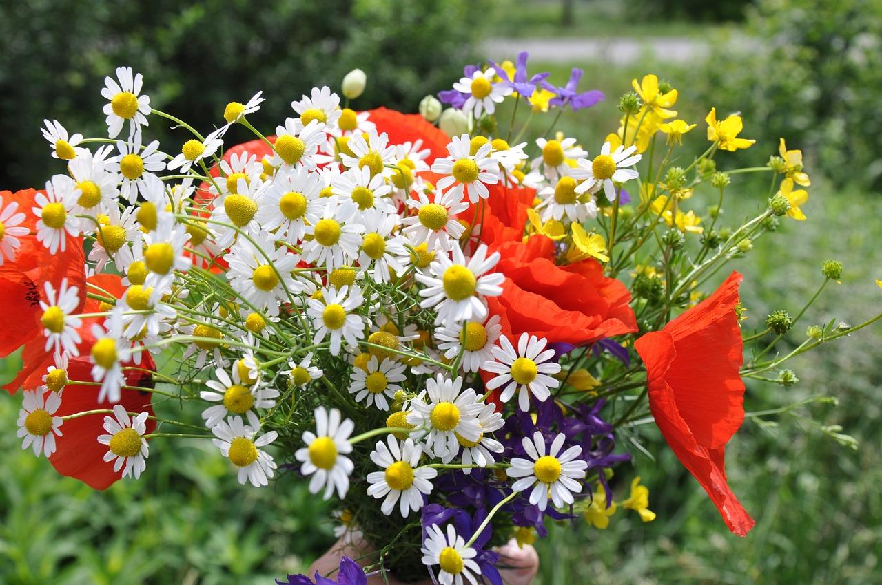 Букеты цветы, фотографии букетов полевых цветов