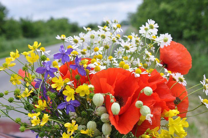 вышло, шикарный букет полевых цветов фото картинки могут