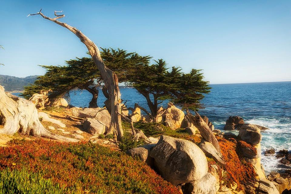 Zypresse, Meer, Ozean, Oceanside, Strand, Pazifik