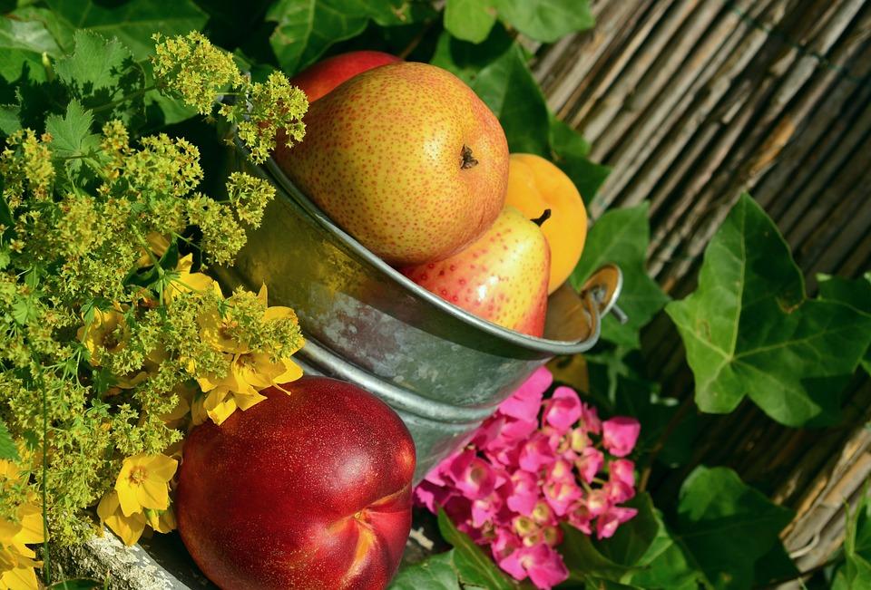 Gyümölcsök, Kert, Gyümölcs, Aratás, Csendélet, Színes