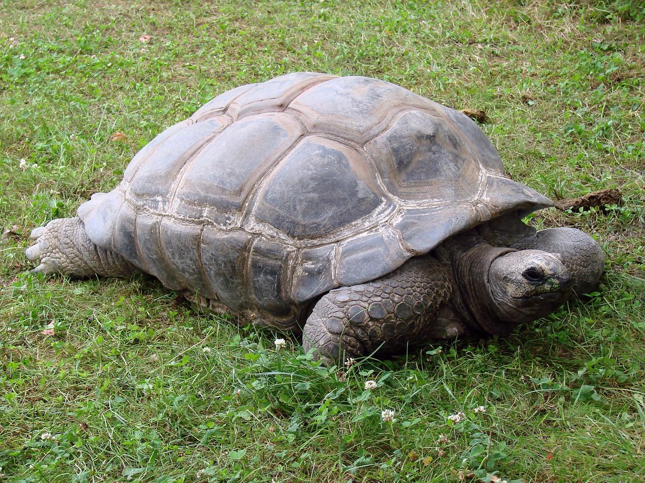 все ячейкам, фотографии гигантских черепах праву считается величайшим