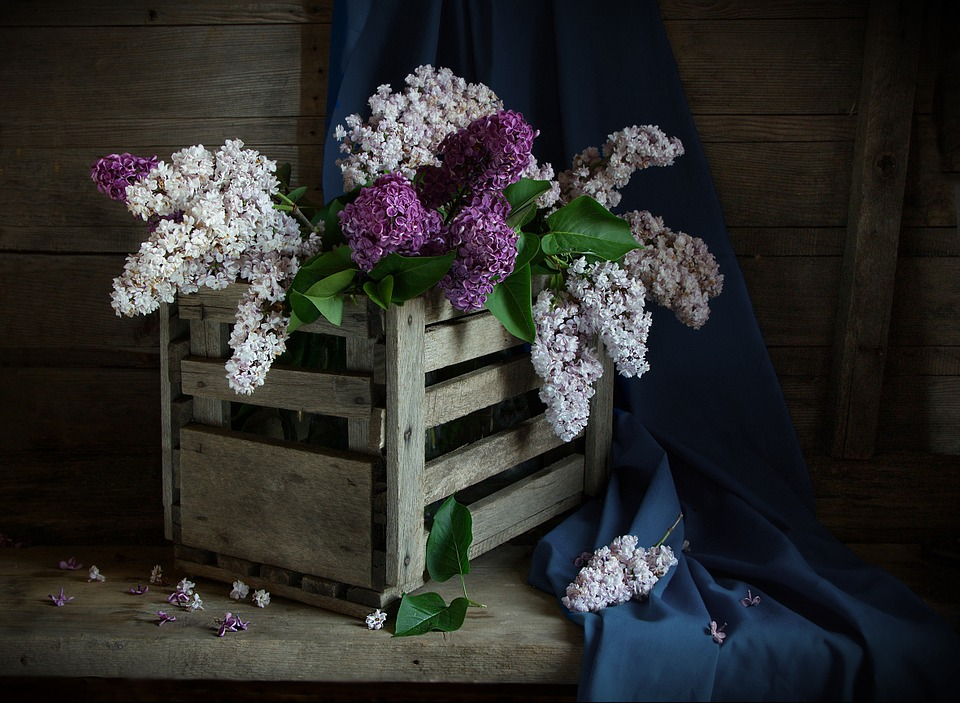 Free Photo Still Life Lilac Shadow Free Image On