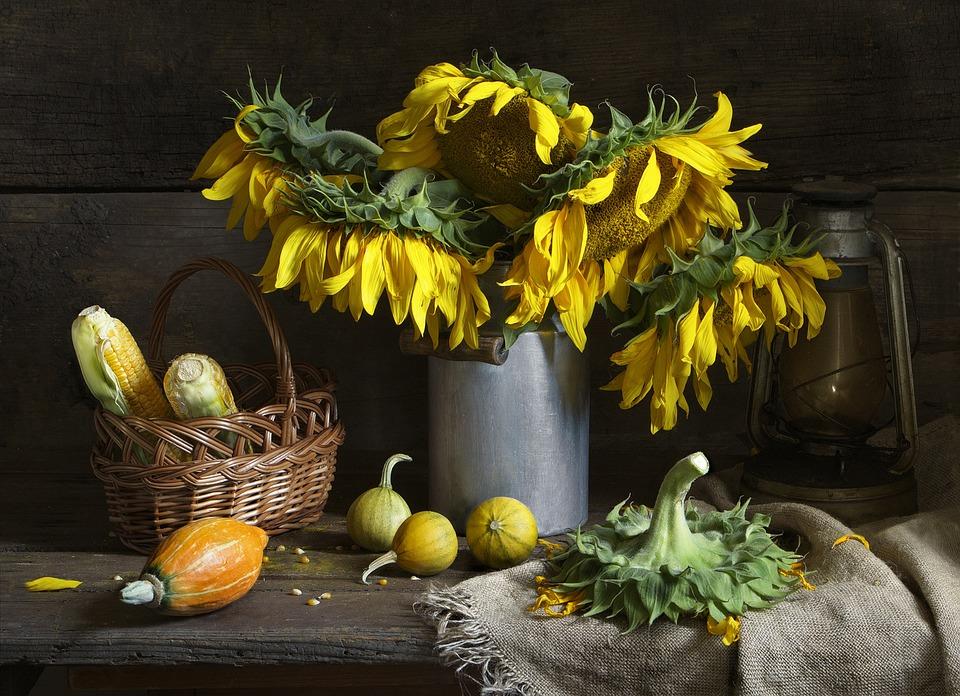 Free Photo Still Life Sunflower Bouquet Free Image On
