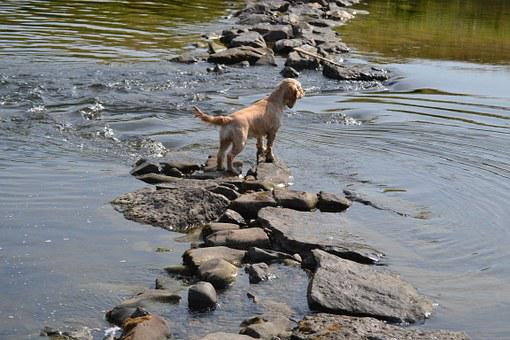 Dog In The Water, Refreshment