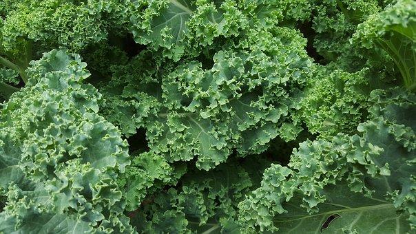 Kale, Lettuce, Salad, Organic, Food