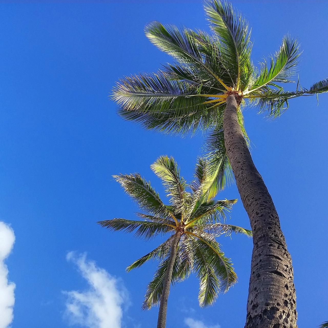 пальмы картинки больших размеров самое просторное