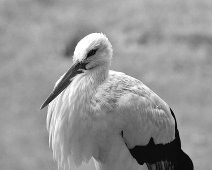 obrie biele vtáky