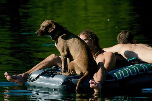 Dinghy, Dog, Human, Water, Bathers