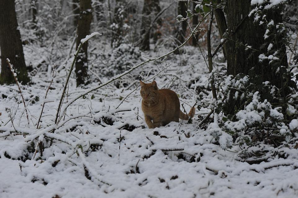 Hiver neige froid photo gratuite sur pixabay - Photos de neige gratuites ...