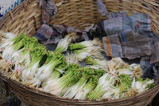 Saplings, Basket, Plants