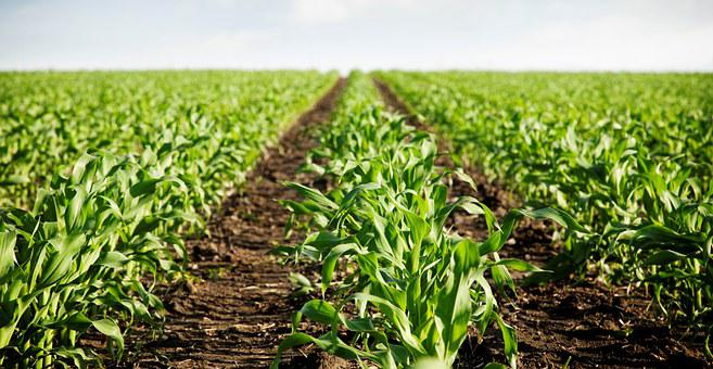 Field, Agriculture, Earth