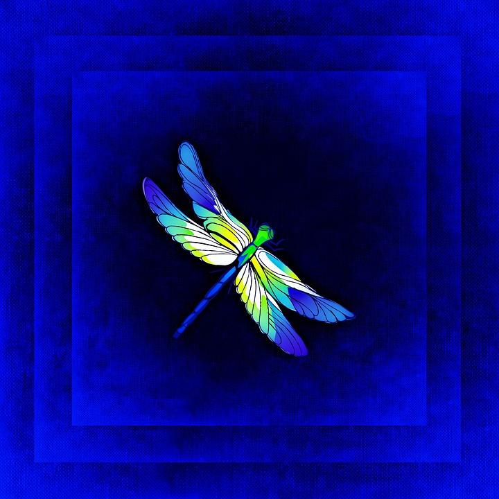 Libelle Rahmen Bild · Kostenloses Bild auf Pixabay