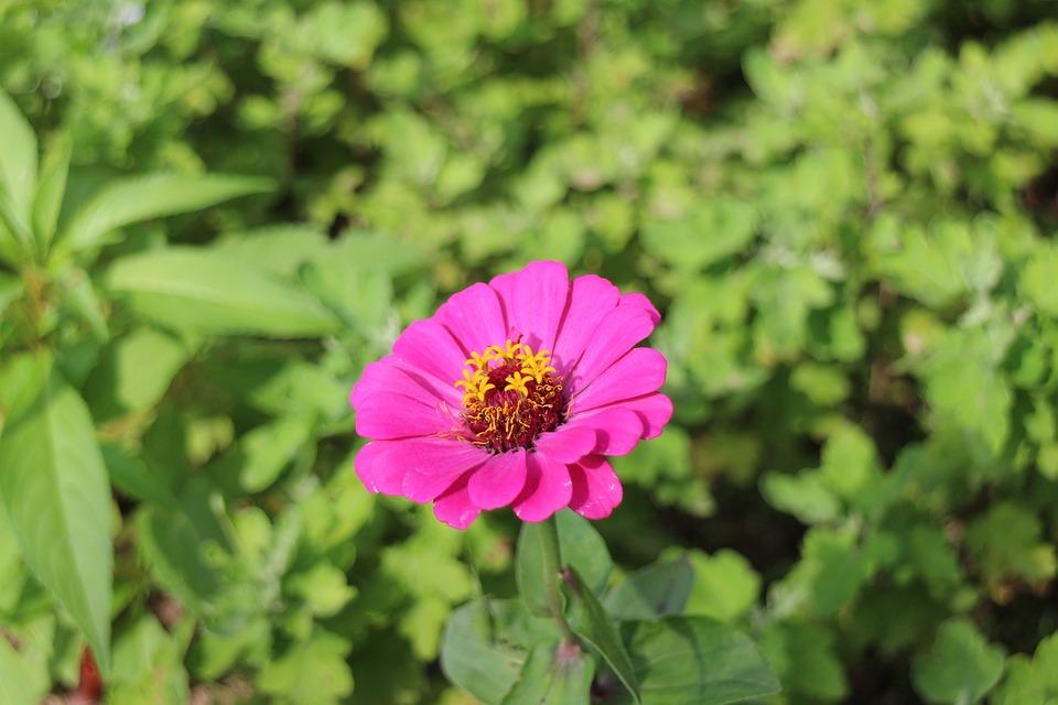 Flores Natureza Plantas Foto Gratuita No Pixabay