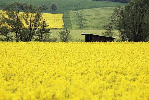 Oilseed Rape, Field, Yellow, Landscape