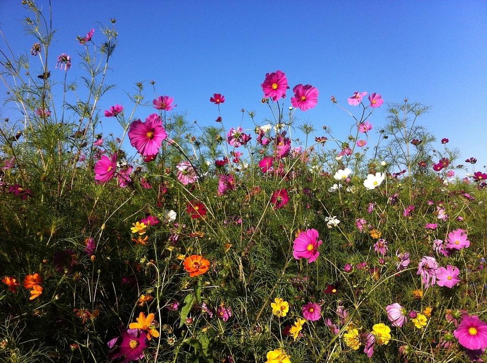 Bildresultat för bild sommarblommor