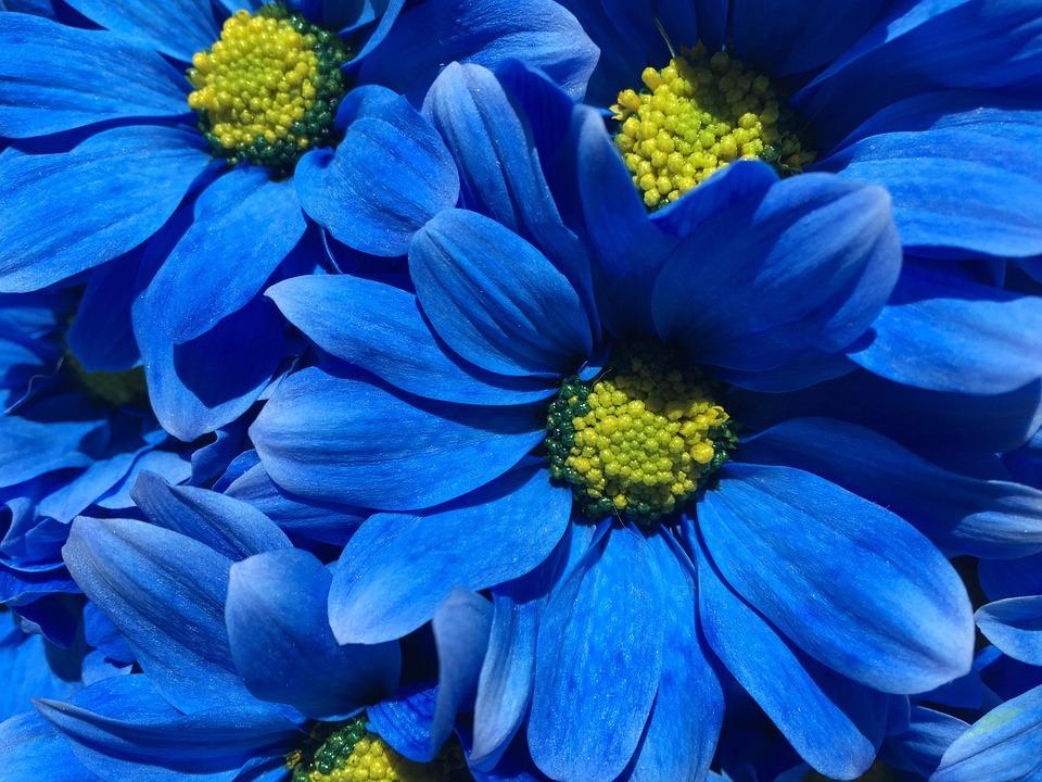 Fiore Blu Petali Foto Gratis Su Pixabay