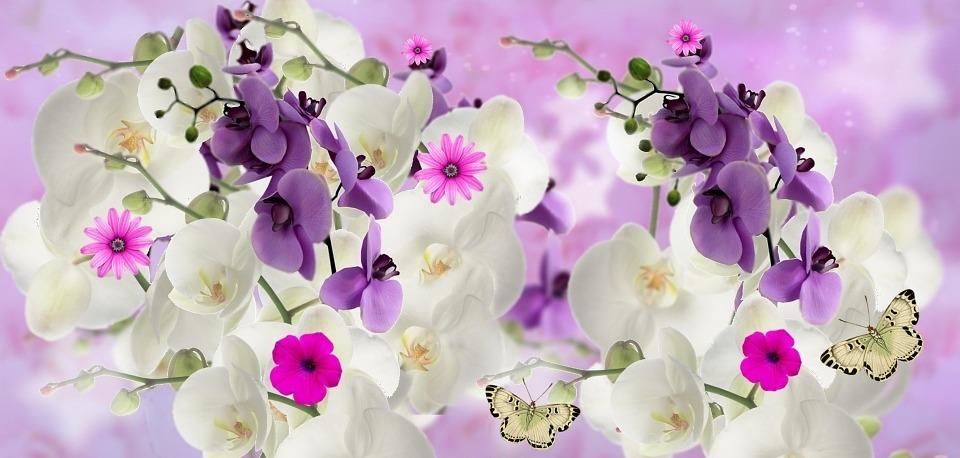 Free illustration orchids flowers garden orquidea for Jardines de orquideas
