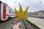 scene, leaf, transport