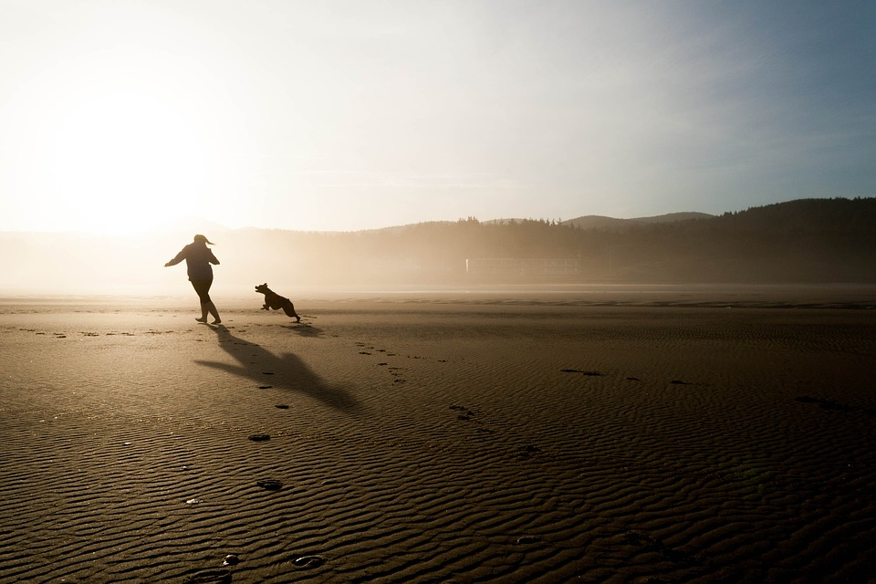 Beach, Dog, Chase, Person, Running, Play, Fun, Happy