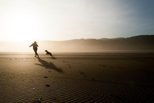Beach, Dog, Chase, Person, Running, Play