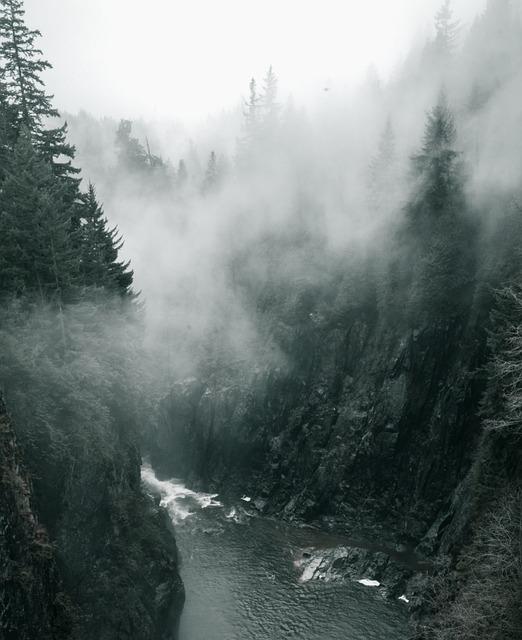 Лес в тумане фото