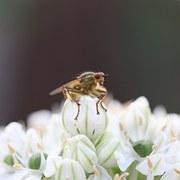kukka ja mehiläinen eroottisia videoita