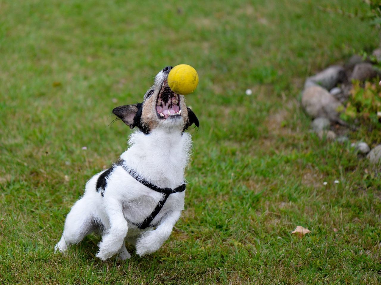 Боксеры собаки фото название редко виделся