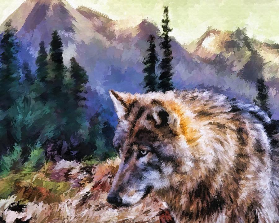 Wolf, Wildlife, Predator, Animal, Outdoors, Nature