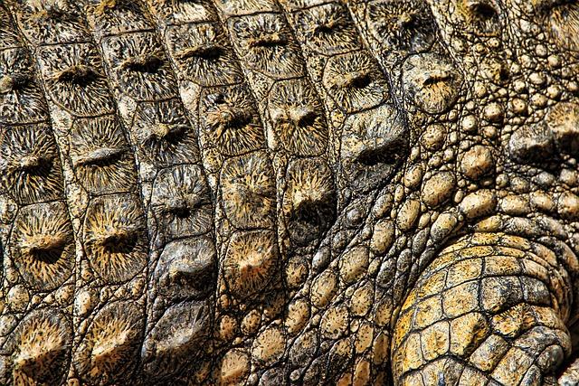 Кожа крокодила обои на рабочий стол