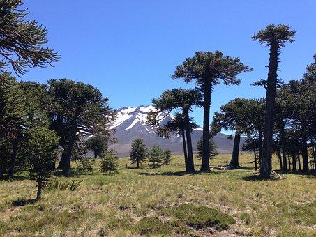 Parque Nacional, Los Araucarias