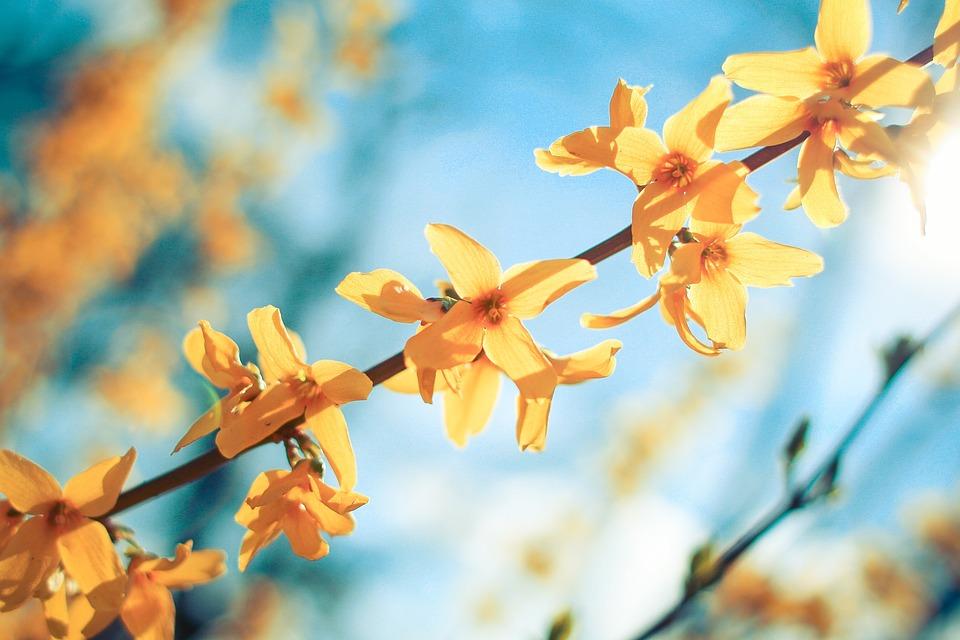 秋, 植物, 花, 自然, 黄色, ゴールド, アウトドア, 探る, 季節, 風光明媚な, 地球, ライブ