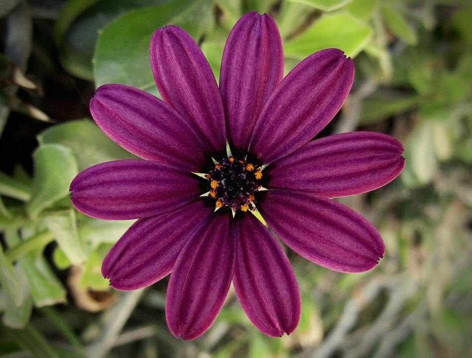 Flower Petals Pollen Free Photo On Pixabay