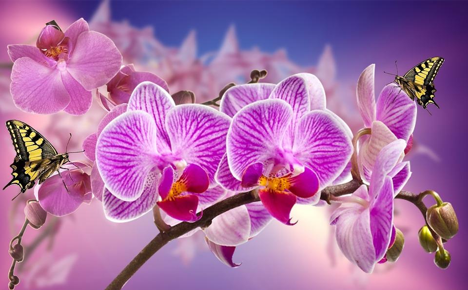 orquídeas flores jardín foto gratis en pixabay