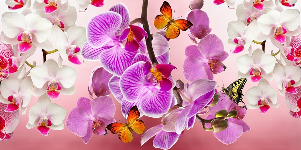 free photo orchids, flowers, garden, orquidea  free image on, Beautiful flower